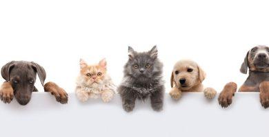 Nuestras mascotas necesitan de nuestra compañia llevala donde vayas
