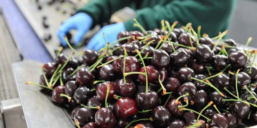 trabajo en dublin empaquetando frutas